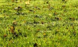 Herbstblatt- und Spinnenweb-Hintergrund Lizenzfreies Stockbild