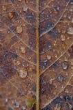 Herbstblattabschluß oben Lizenzfreies Stockbild