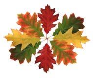 Herbstblattaufbau Lizenzfreies Stockfoto
