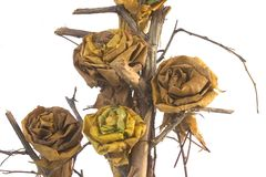 Herbstblattaufbau Stockfoto