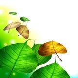 Herbstblattfallen getrennt auf Weiß Lizenzfreies Stockbild