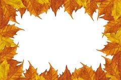 Herbstblattfeld Stockbild