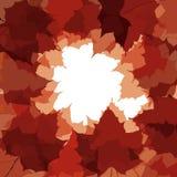 Herbstblattfeld. Stockfoto