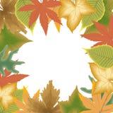 Herbstblattfeld Stockfotos
