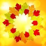 Herbstblattgrenzhintergrundglühen Stockfotos