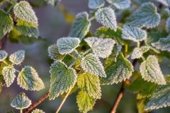 Herbstblattnessel Lizenzfreie Stockfotografie