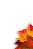Herbstblattunschärfe stock abbildung