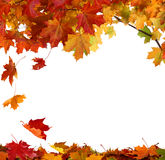Herbstblätter getrennt auf weißem Hintergrund Lizenzfreie Stockbilder