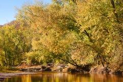 Herbstblätter und -bäume auf Fluss Stockbild