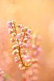 Herbstblumen Stockbild