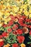Herbstblumen lizenzfreies stockbild