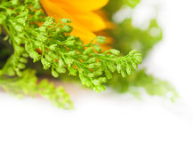 Herbstblumen, Blumenstrauß Lizenzfreie Stockfotos