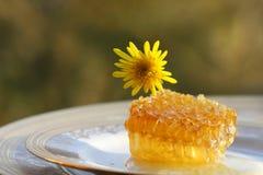 Herbstblumenhonig Lizenzfreie Stockbilder