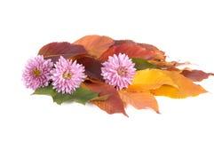 Herbstblumenstrauß. Lizenzfreies Stockfoto
