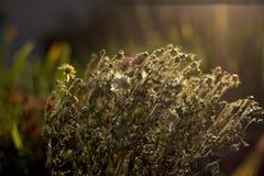 Herbstblumenstrauß der Blumenhintergrundbeleuchtung Lizenzfreie Stockfotografie