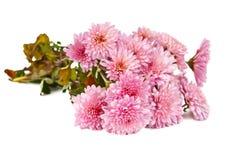 Herbstblumenstrauß der Chrysanthemen Stockbild
