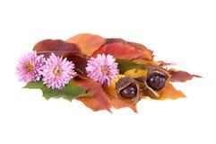 Herbstblumenstrauß mit Kastanien. Lizenzfreie Stockbilder