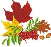 Herbstblumenstrauß von den Blättern der Bäume Stockfoto