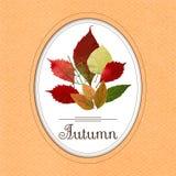 Herbstblumenstrauß von den bunten Blättern ENV, JPG Stockfotografie