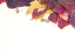 Herbstblumenstrauß von roten und gelben Blättern auf einem weißen Hintergrund stockbild
