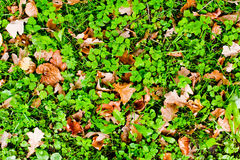 Herbstboden Lizenzfreie Stockfotos