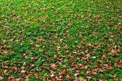 Herbstboden Stockbild