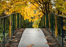 Herbstbrücke in den Bäumen stockfotografie