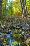 Herbstbraun Stockbilder