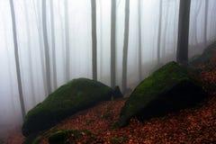 Herbstbuche stockbild