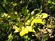 Herbstbusch stockbild