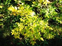 Herbstbusch stockfoto