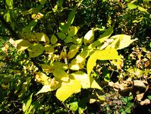 Herbstbusch stockfotos