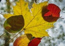 Herbstcocktail Lizenzfreies Stockbild