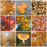 Herbstcollage Stockbild