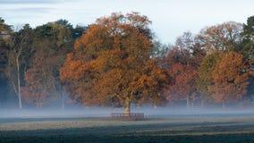 Herbstdämmerung im englischen Park Lizenzfreie Stockfotografie