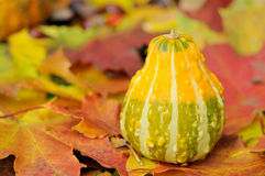 Herbstdekoration Stockfotografie