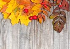 Herbstdekoration auf hölzernem Hintergrund Stockfoto