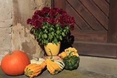 Herbstdekoration mit Kürbis und Asterblume Stockfoto