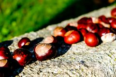 Herbstdekoration mit Rosskastanien oder Conker lizenzfreies stockbild