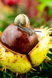 Herbstdekoration with a snail Stock Images