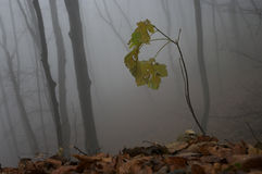 Herbstdetail Lizenzfreies Stockfoto