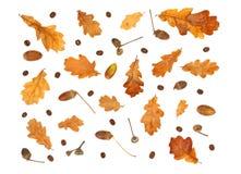 Herbstdruck mit Kaffeebohnen, Eichel und Blättern der gelben Eiche Lizenzfreies Stockfoto