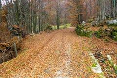 Herbste im Holz Lizenzfreie Stockbilder