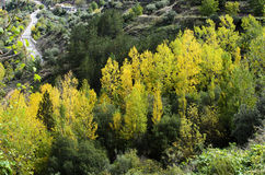 Herbstecke Stockfotografie