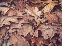 Herbsteiche verlässt Hintergrundbeschaffenheit Stockfoto
