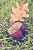 Herbsteicheln auf Gras, Weinleseblick Stockfotos