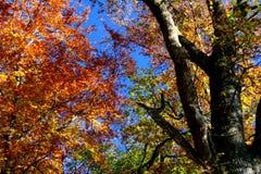 Herbsteindruck Lizenzfreies Stockfoto