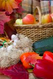 Herbsternte des Gemüses Lizenzfreies Stockfoto