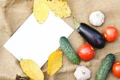 Herbsternte des Gemüses Begriffserntegraphik mit verschiedenem Gemüse auf dem Feld Lizenzfreie Stockfotografie