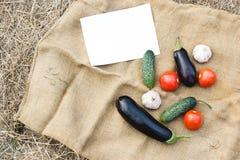 Herbsternte des Gemüses Begriffserntegraphik mit verschiedenem Gemüse auf dem Feld Lizenzfreies Stockfoto